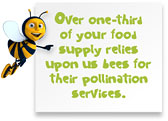 Over one-third of food relies upon bees for pollination
